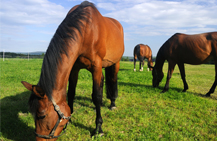 Equine Insurance